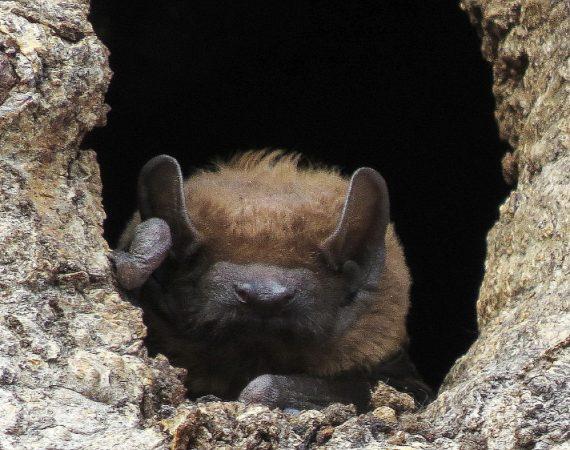 Nietoperze – pożyteczne ssaki
